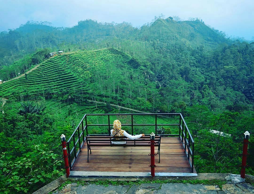 Kebun Teh Nglinggo Adalah Salah Satu 25 Destinasi Wisata Di Jogja